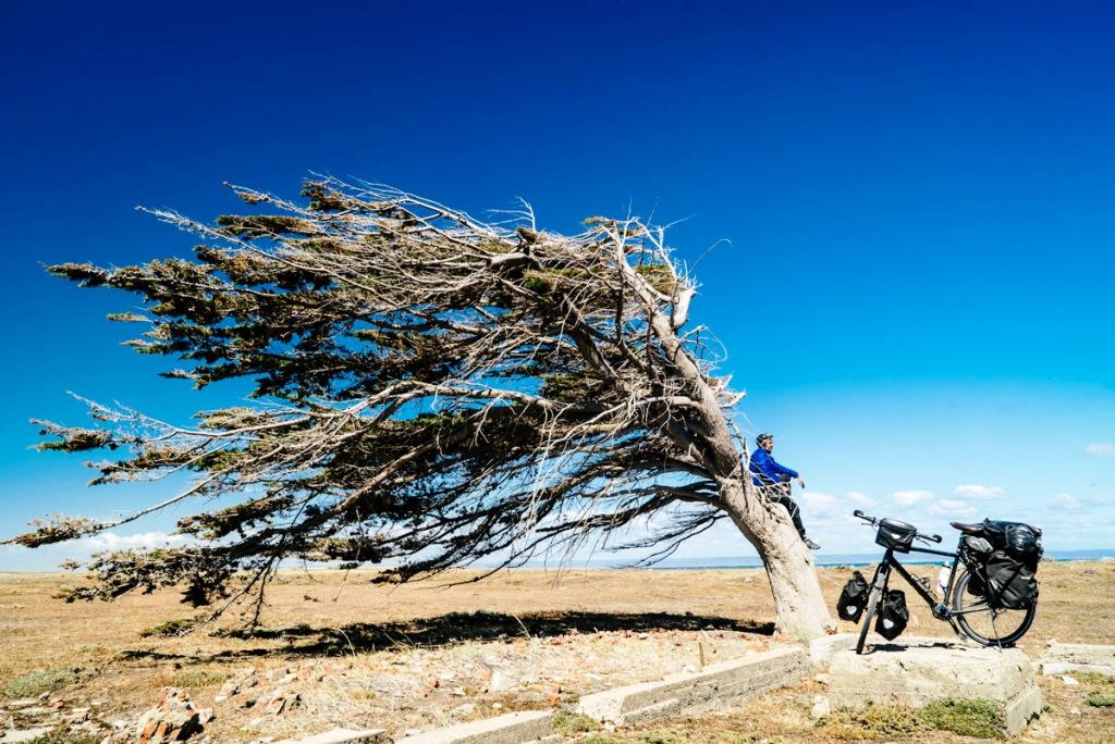 After battling with winds over the past the four days, and crossing into Chile, I managed to arrive in Porvenir yesterday. Patagonian Steppe is a treeless region. I don't remember seeing any trees for about two and when I saw one, it was windswept and looked like a flag tree.They call Patagonia, Escoba de Dios, God's broom, due to its persistent wind which sweeps everything.When I arrived in Pornevir, my soul had been crushed by the wind.